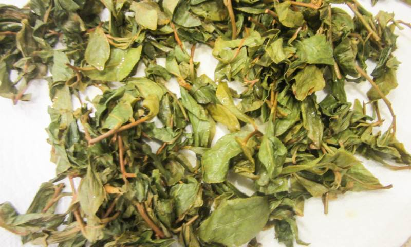 Green Tea Leaves After Steaming and Before Rolling, by Talia Hirsch